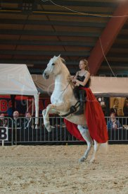 salon-du-cheval--hannut-480_26160296282_o