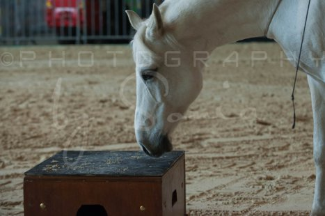 salon-du-cheval--hannut-484_26186297241_o