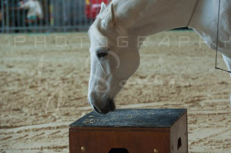 salon-du-cheval--hannut-485_25650054273_o