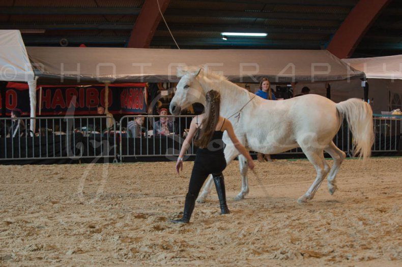 salon-du-cheval--hannut-491_25647952274_o