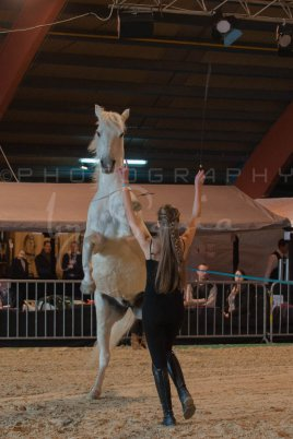 salon-du-cheval--hannut-493_25979877730_o