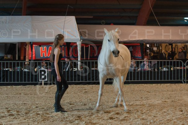 salon-du-cheval--hannut-495_26226803216_o