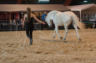 salon-du-cheval--hannut-511_25979876110_o