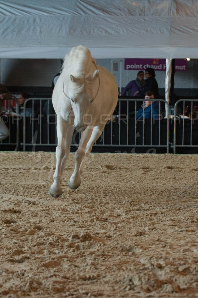 salon-du-cheval--hannut-512_26252727295_o