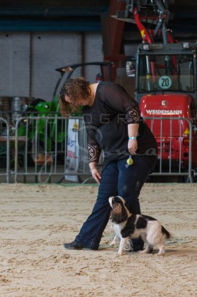 salon-du-cheval--hannut-51_26252758575_o