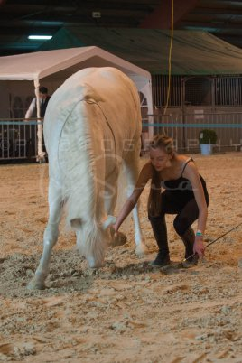 salon-du-cheval--hannut-522_26186454361_o