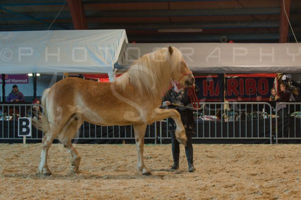 salon-du-cheval--hannut-528_26226800466_o