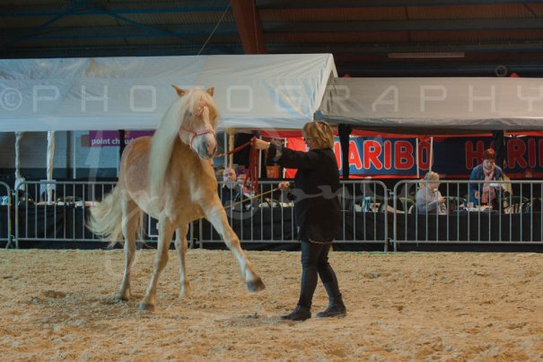 salon-du-cheval--hannut-530_26226800056_o