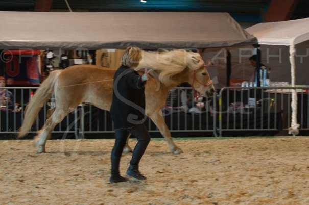 salon-du-cheval--hannut-536_26160290592_o