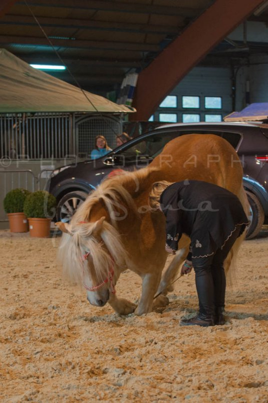 salon-du-cheval--hannut-553_25979873690_o