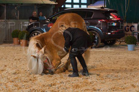 salon-du-cheval--hannut-554_26252724945_o