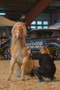 salon-du-cheval--hannut-557_26186451971_o