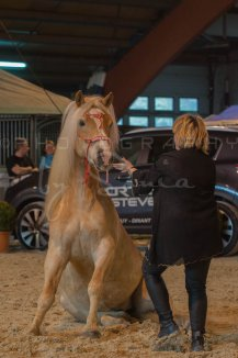 salon-du-cheval--hannut-558_25650047933_o