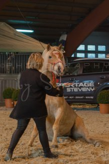 salon-du-cheval--hannut-559_25650047743_o