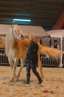 salon-du-cheval--hannut-564_26160288462_o