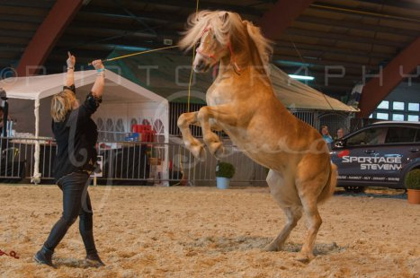 salon-du-cheval--hannut-566_26160136052_o