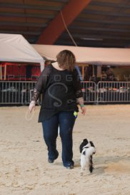 salon-du-cheval--hannut-58_26252757395_o