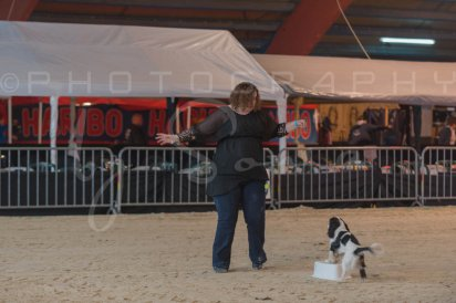 salon-du-cheval--hannut-63_26226831026_o