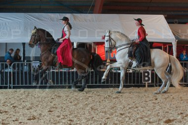 salon-du-cheval--hannut-649_26160282682_o