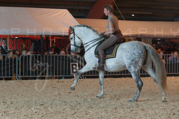salon-du-cheval--hannut-727_26226778976_o