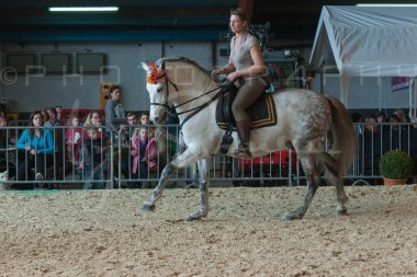 salon-du-cheval--hannut-733_26226643476_o