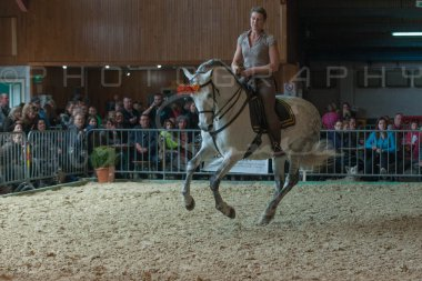 salon-du-cheval--hannut-737_25647925404_o