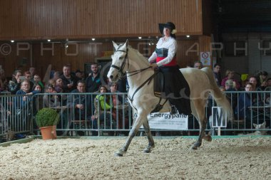salon-du-cheval--hannut-759_26252701325_o