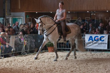 salon-du-cheval--hannut-772_25979848080_o