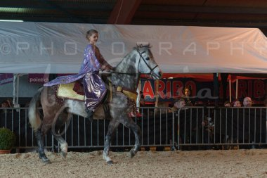 salon-du-cheval--hannut-805_25647792744_o