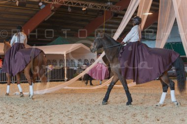 salon-du-cheval--hannut-876_25650010943_o