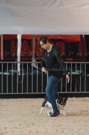 salon-du-cheval--hannut-87_25979902060_o