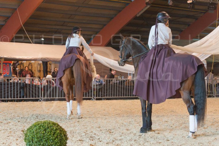 salon-du-cheval--hannut-885_26252686565_o