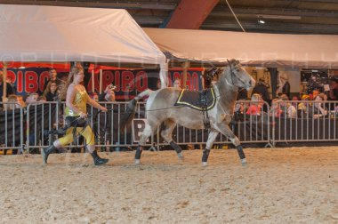 salon-du-cheval--hannut-887_26160131872_o