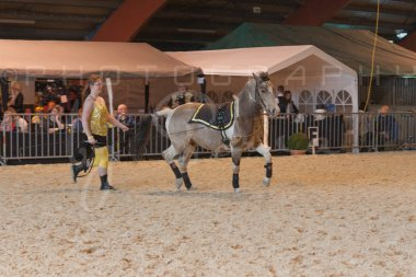 salon-du-cheval--hannut-888_26160251142_o