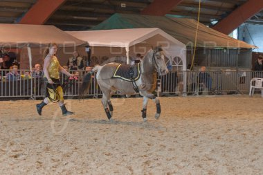 salon-du-cheval--hannut-889_25650009353_o