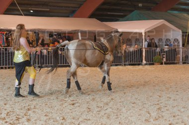 salon-du-cheval--hannut-893_25979713200_o