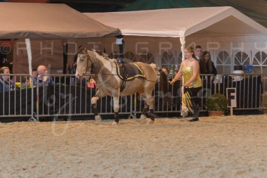salon-du-cheval--hannut-900_25647908204_o
