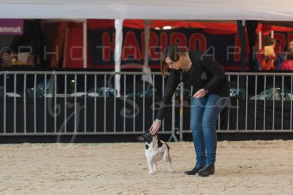 salon-du-cheval--hannut-90_26252753485_o
