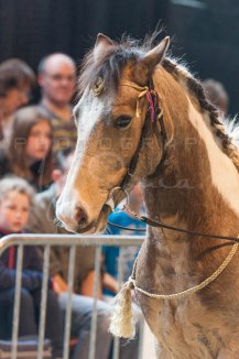 salon-du-cheval--hannut-912_26186411841_o