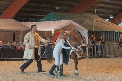 salon-du-cheval--hannut-917_26252565095_o