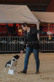 salon-du-cheval--hannut-91_25979901690_o