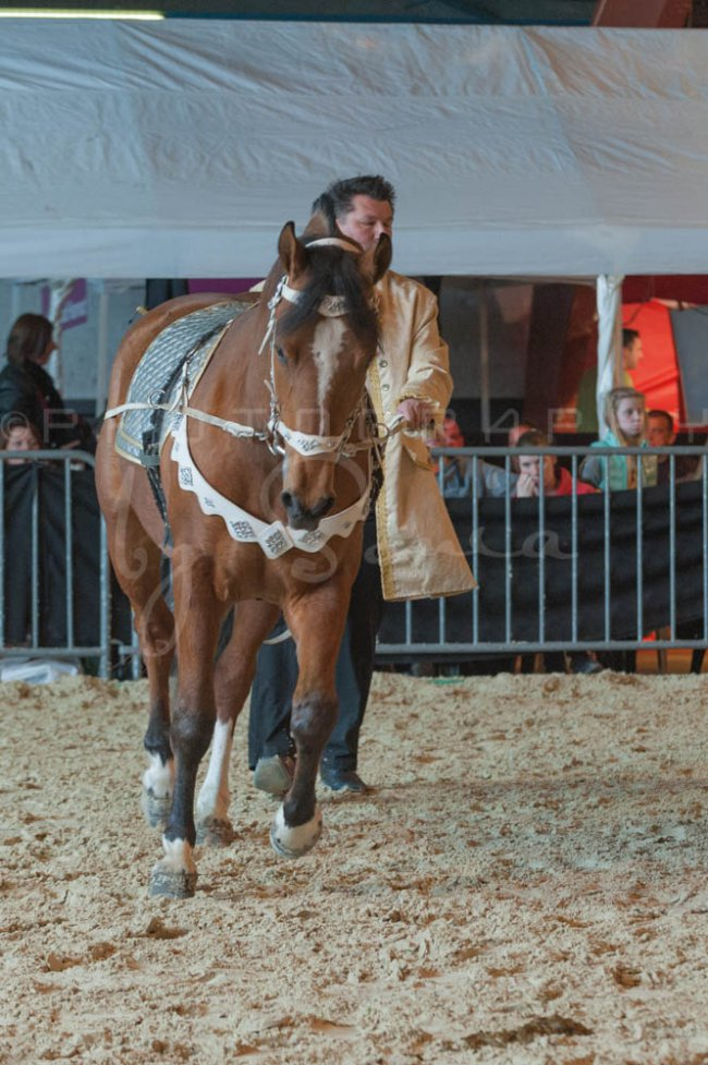 salon-du-cheval--hannut-920_26186411021_o