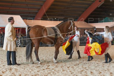 salon-du-cheval--hannut-927_25647905514_o