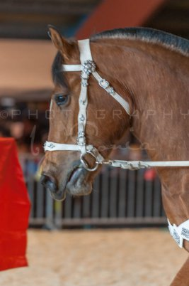 salon-du-cheval--hannut-930_26186408891_o