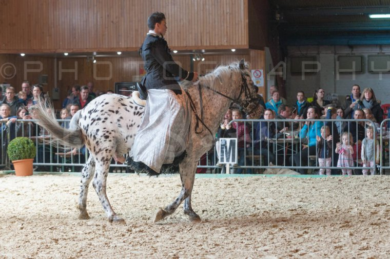 salon-du-cheval--hannut-935_26160244822_o