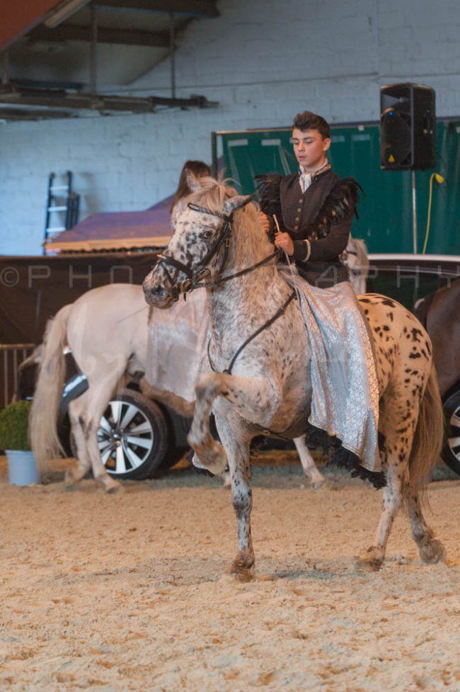 salon-du-cheval--hannut-936_26186407591_o