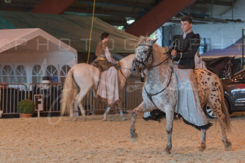 salon-du-cheval--hannut-937_25979827810_o