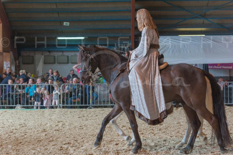 salon-du-cheval--hannut-940_25647902484_o