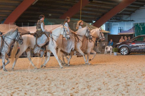 salon-du-cheval--hannut-953_26252564705_o