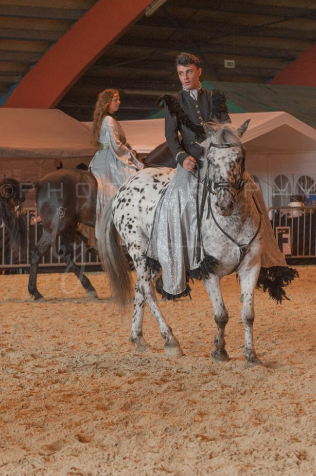 salon-du-cheval--hannut-963_26160240622_o